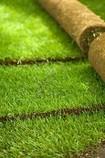 paysagiste Nantes 44 Terrasse & Jardin gazon pelouse